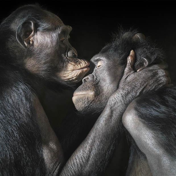 Студийные портреты диких животных от Тима Флака