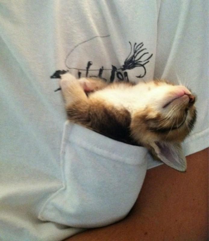 Милота дня! Фотографии животных, которые спят там, где захотят