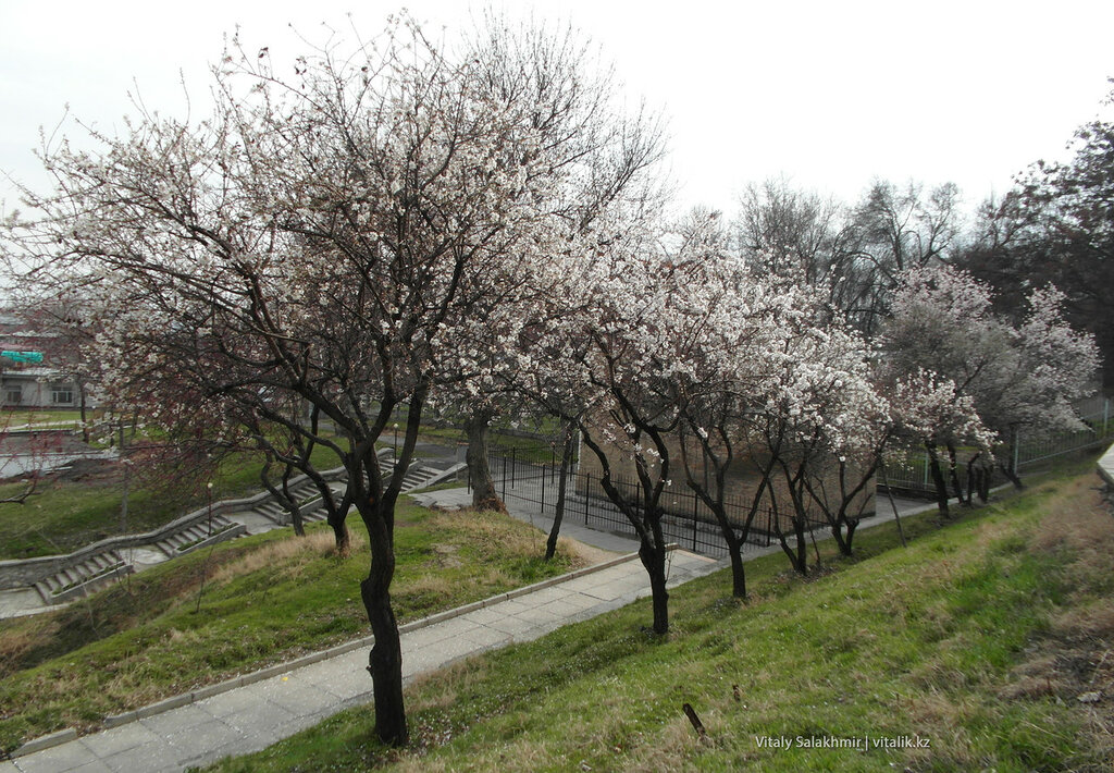 Сулайман-Тоо весной