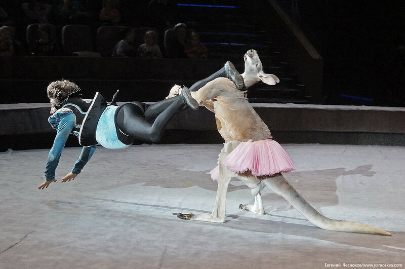 Цирк Дарьи Костюк. Вегас. 15.10.17.40..jpg