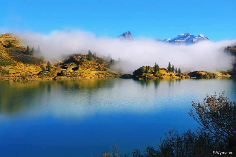 синий туман похож на обман...