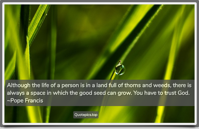 Although the life of a person is in a land full of thorns and weeds, there is always a space in which the good seed can grow. You have to trust God. ~Pope Francis