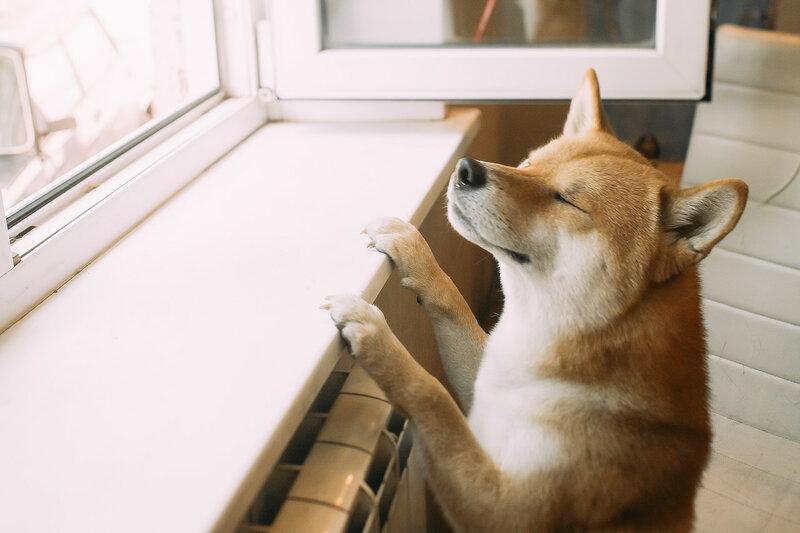 "Фотоконкурс ""Про собак"""