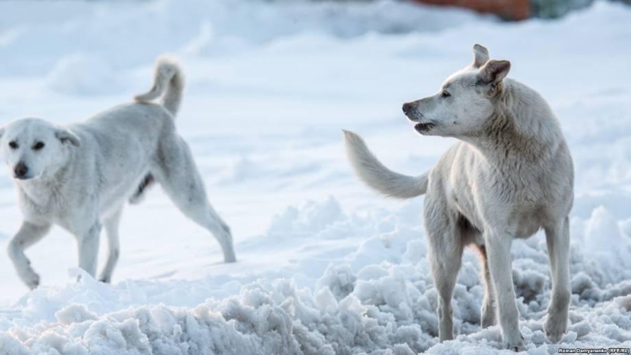 Законы стаи. В российском Воронеже убивают собак перед Чемпионатом мира по футболу