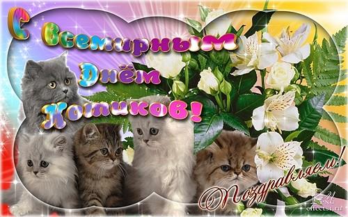 Картинка С всемирным днем котиков!