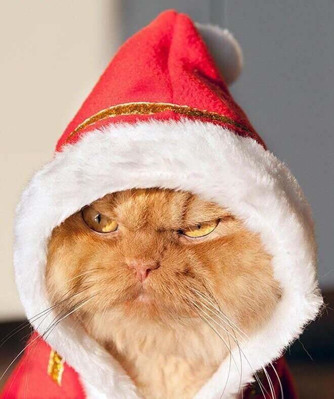 0 17d27b bffde341 XL - Новогоднее настроение у домашних животных