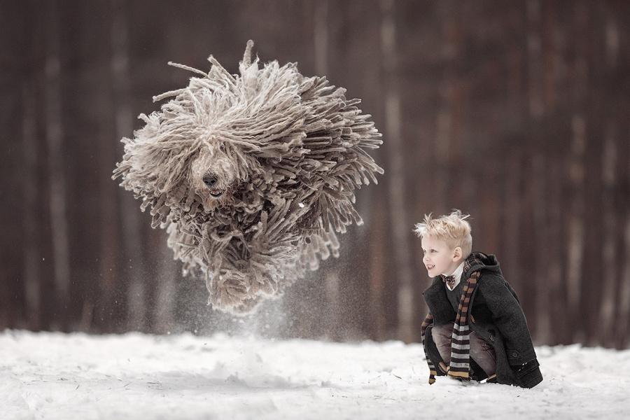 Когда твоя собака – комондор (7 фото)
