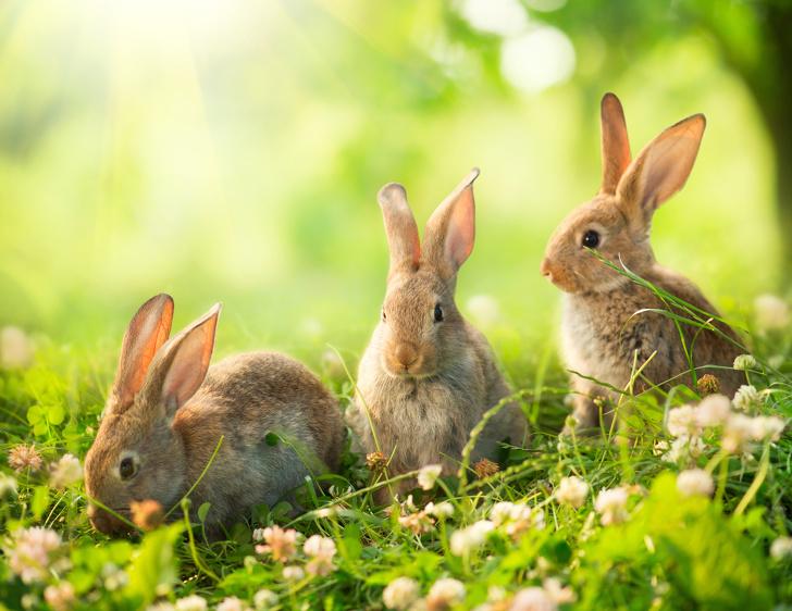 странное страны названия родина кролики реки Земля Испания