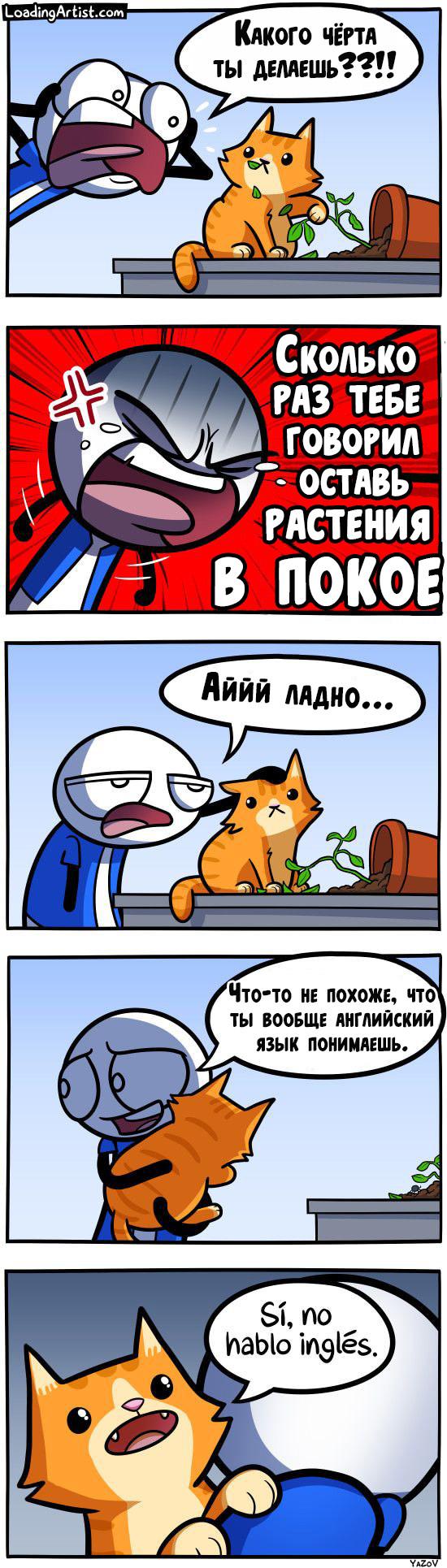 Непонимающий кот