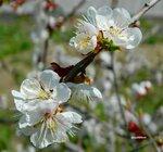 Веточка изящная и нежные цветочки