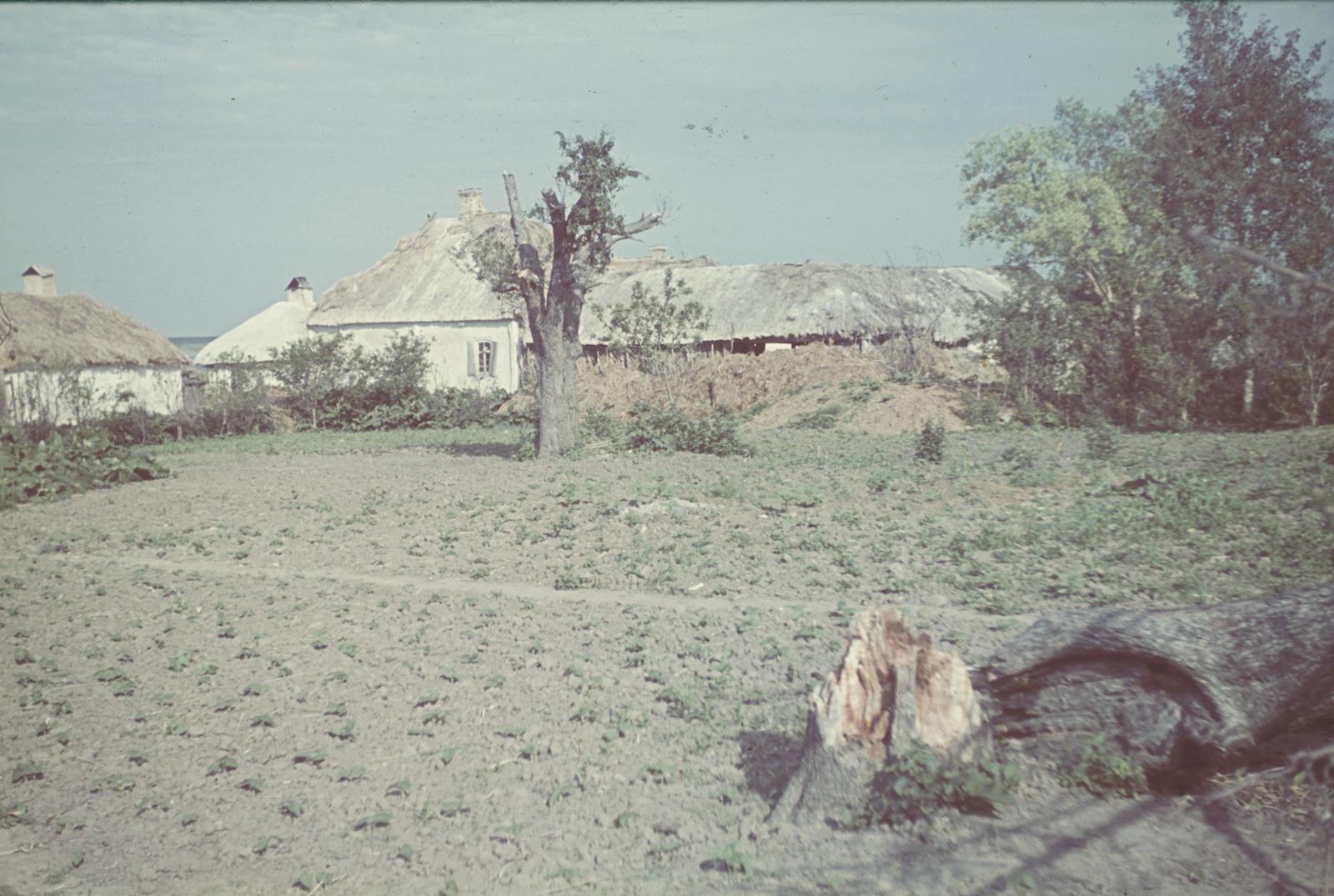 Деревенская изба и поле