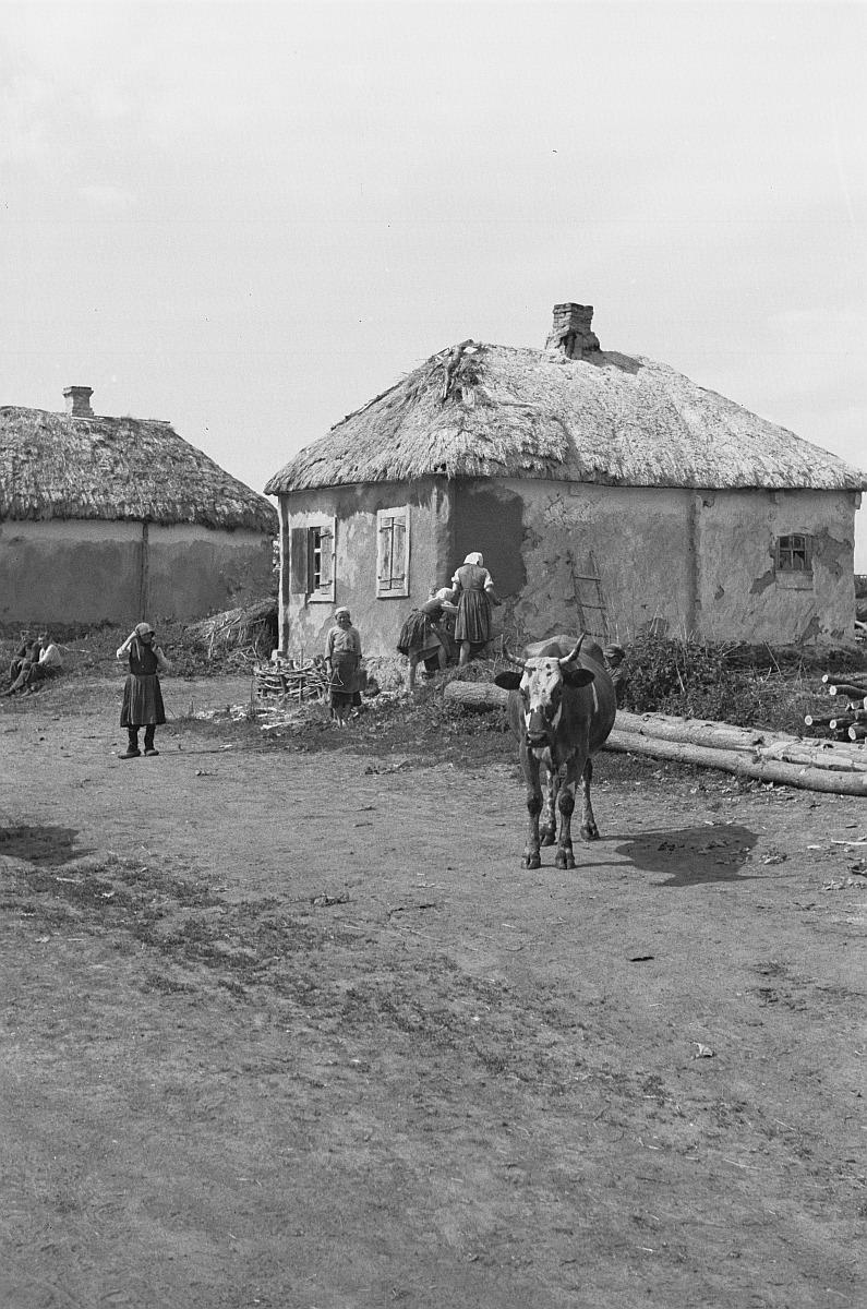 Женщины и корова перед домом