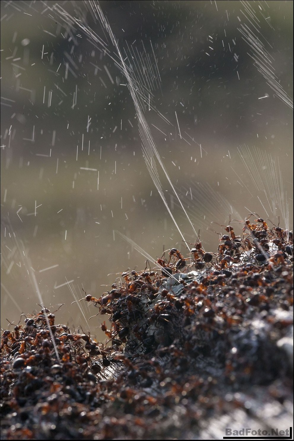 Оборона муравейника