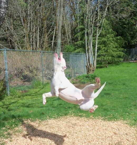 Смешные фотографии собак   милые мордашки, ужимки и серьезные мордочки