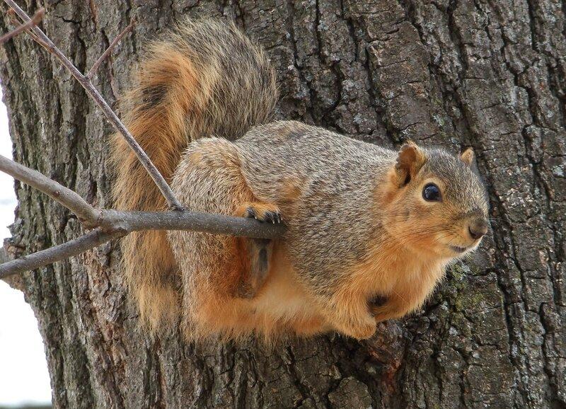 It's Fun Up Here - Cute Squirrel