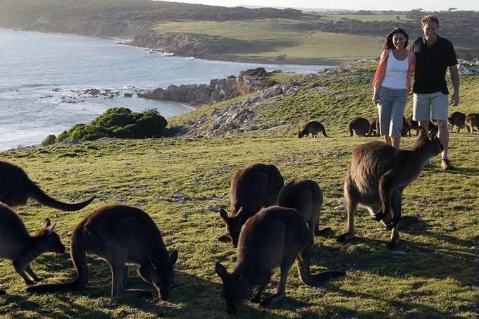 10 мест для отдыха туристов вместе с дикими животными