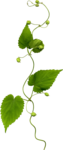 Holliewood_NatureJournal_Flower5.png