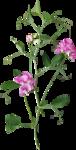 Holliewood_NatureJournal_Flower6.png