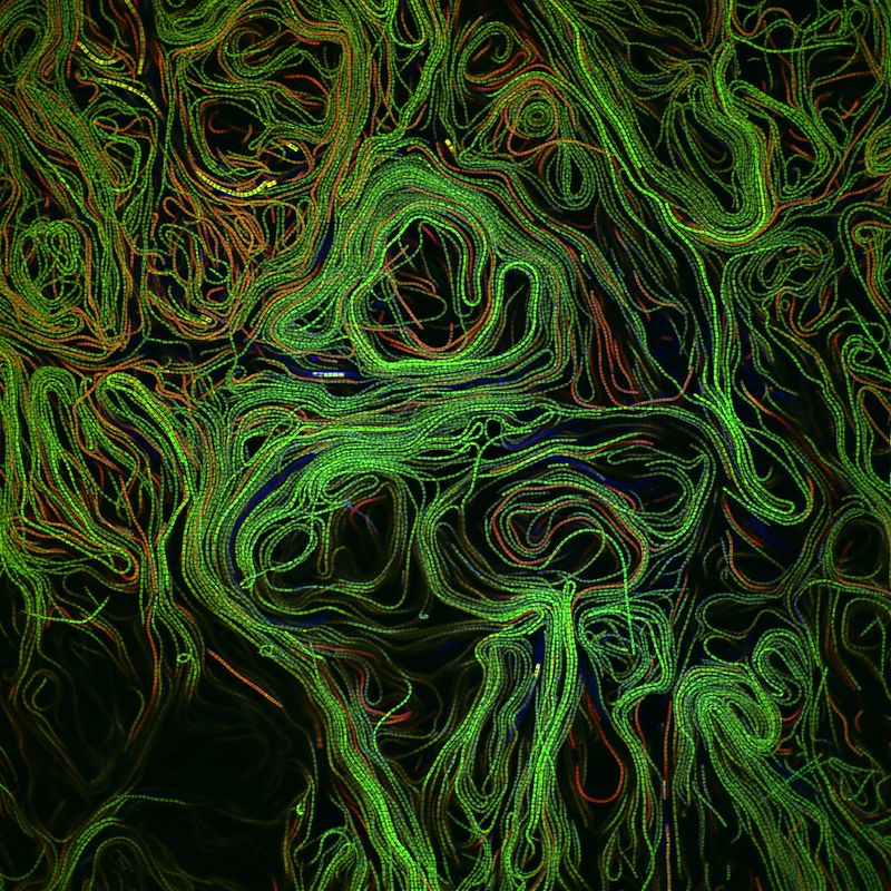 8. Джонатан Фрэнкс Университет Питтсбурга Питтсбург, Пенсильвания Биопленка водоросли Автофлуоресцен