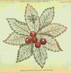 1899-15