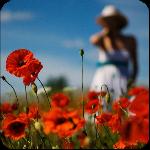 Лето. Аватары от Pavelena