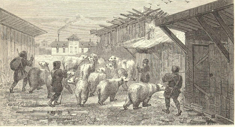 1862. Сибирь. Медведи проходят через село