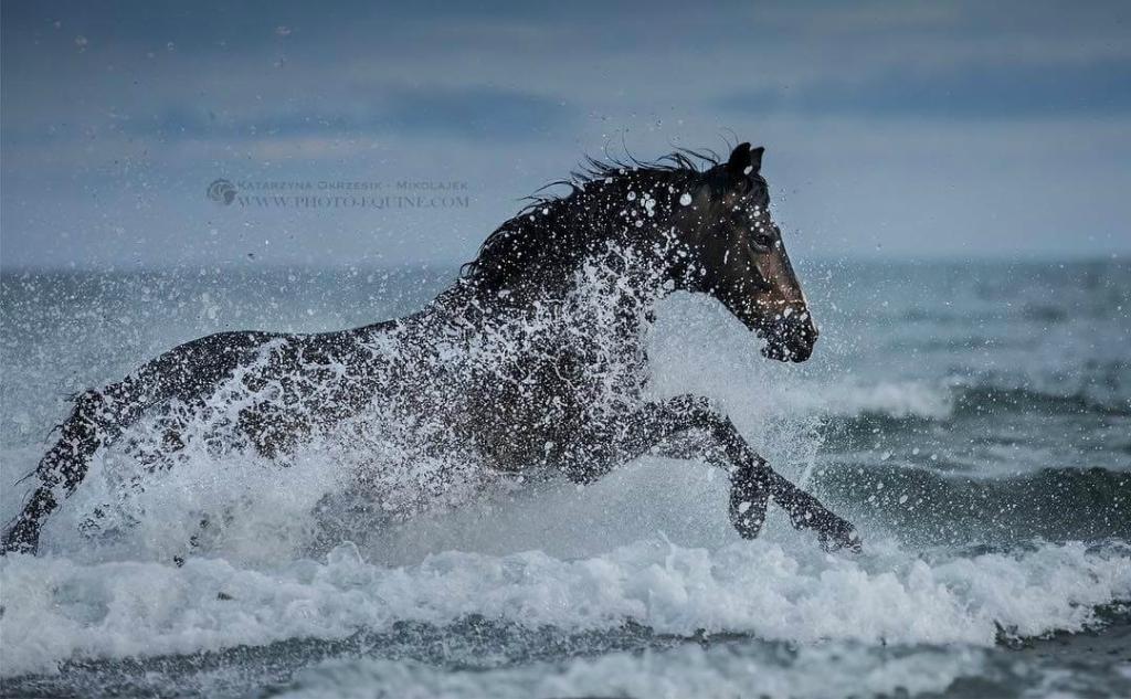 fotografij-loshadej-skachushhih-po-volnam-okeana-foto-11.jpg