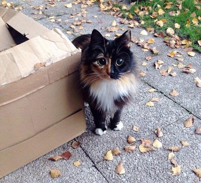 подобрали бездомную кошку что делать