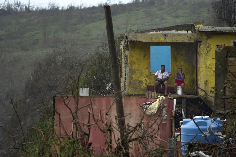 Ободранные ураганом деревья. Пуэрто-Рико, 21 сентября 2017. (Фото Carlos Giusti):