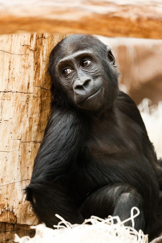 © pixabay     Эти животные ценят красоту природы. Они часами могут наблюдать зазакатом и