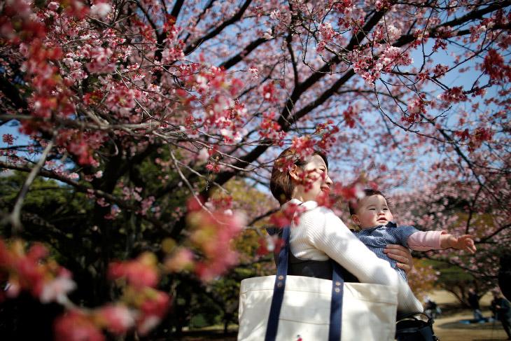 HD весна цветы