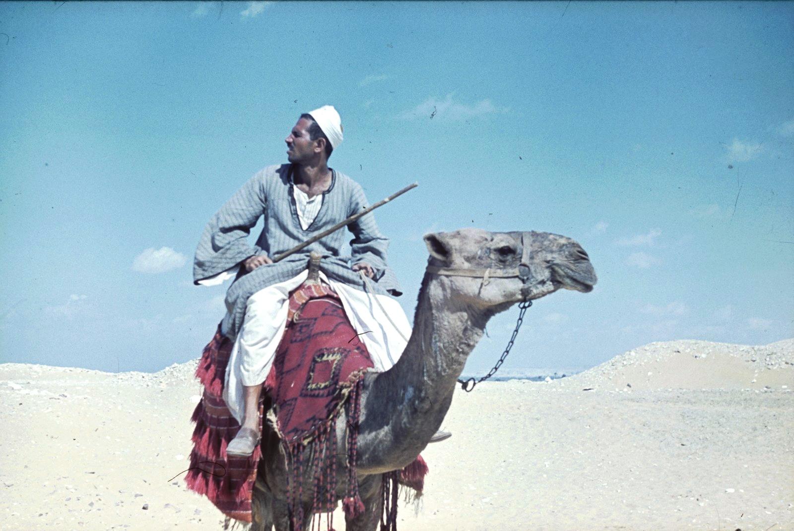 Погонщик верблюдов