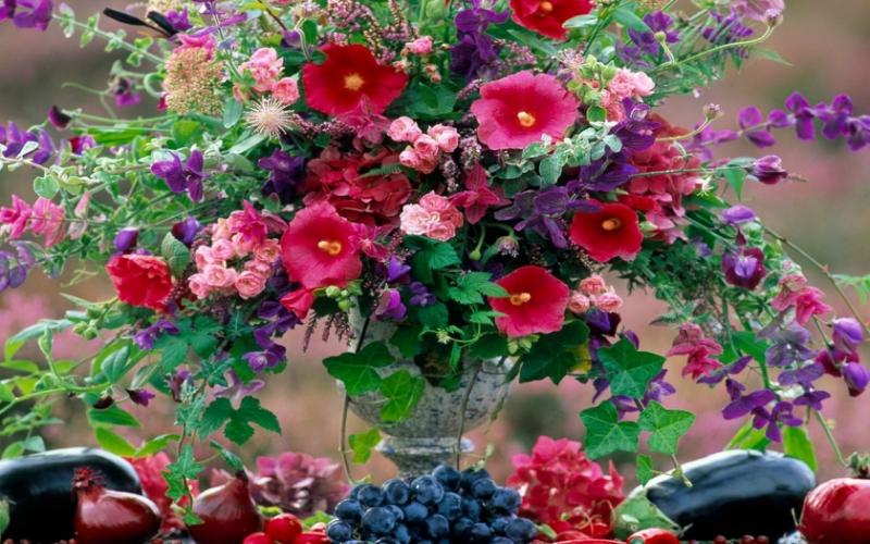 Шток-роза — Посадка семенами — Уход