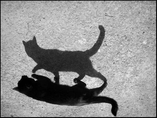 тень.jpg