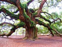 выберите свое дерево