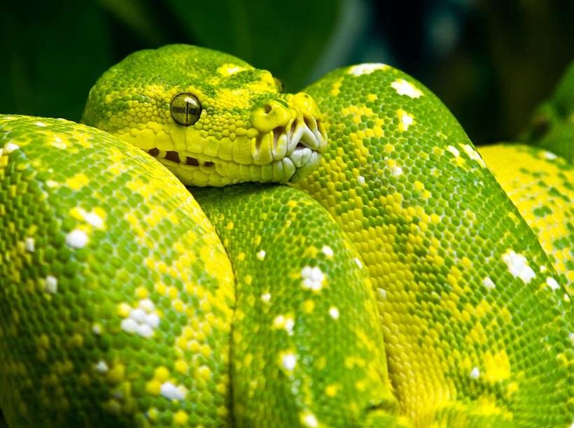Пугающие фотографии змей 0 134ac8 af6cccac orig