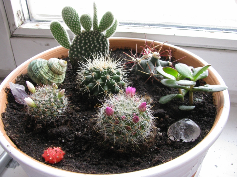 Как сажать кактусы без корней 46