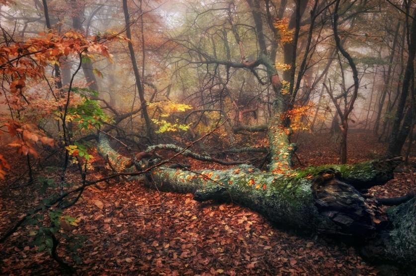 Фото: Александр Киценко