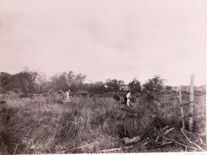Поселенцы во время уборки хлеба.