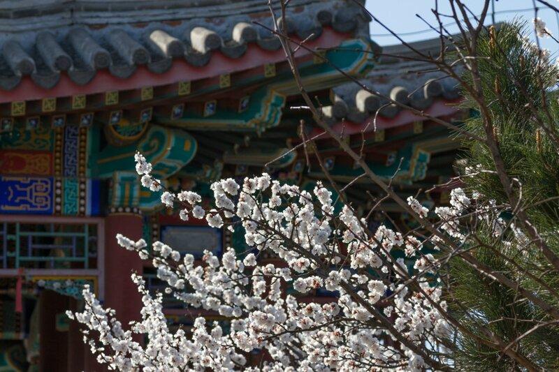 Китайская весна, парк Сяншань, Пекин