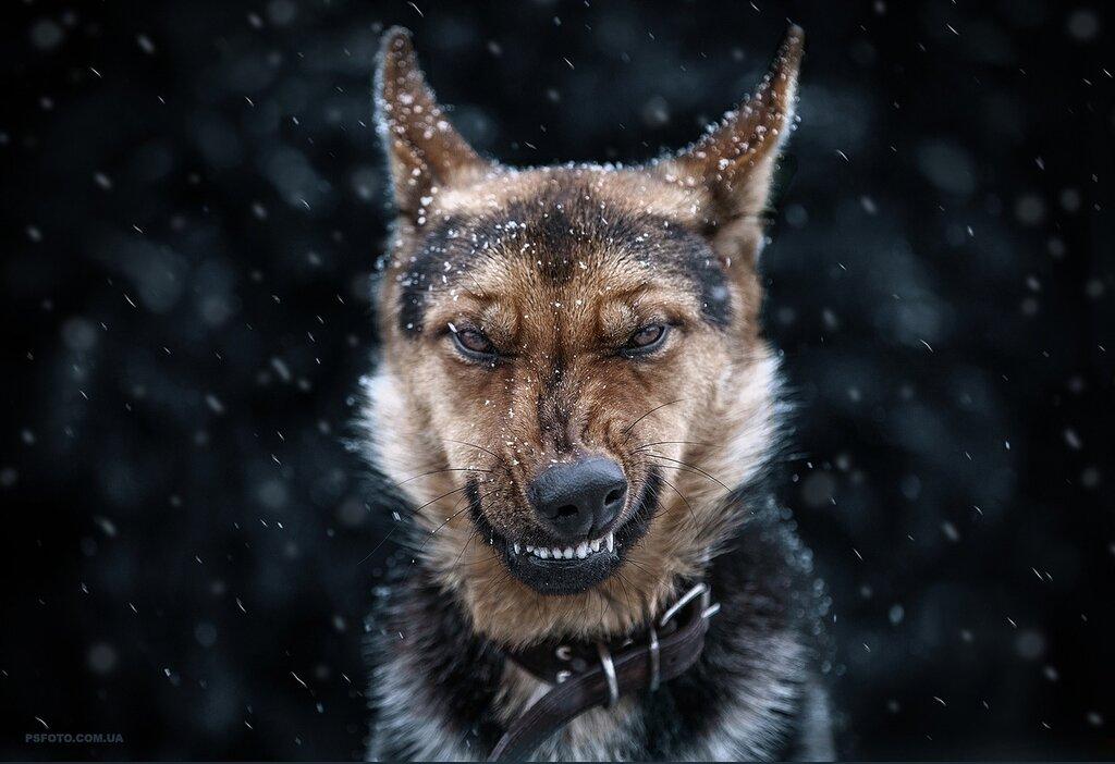 Собака - кусака, улыбака и другие