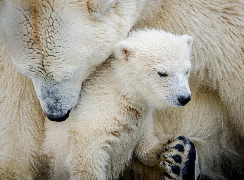 Zoo Novosibirsk.  Ídolo do público - com a pequena Gerda.