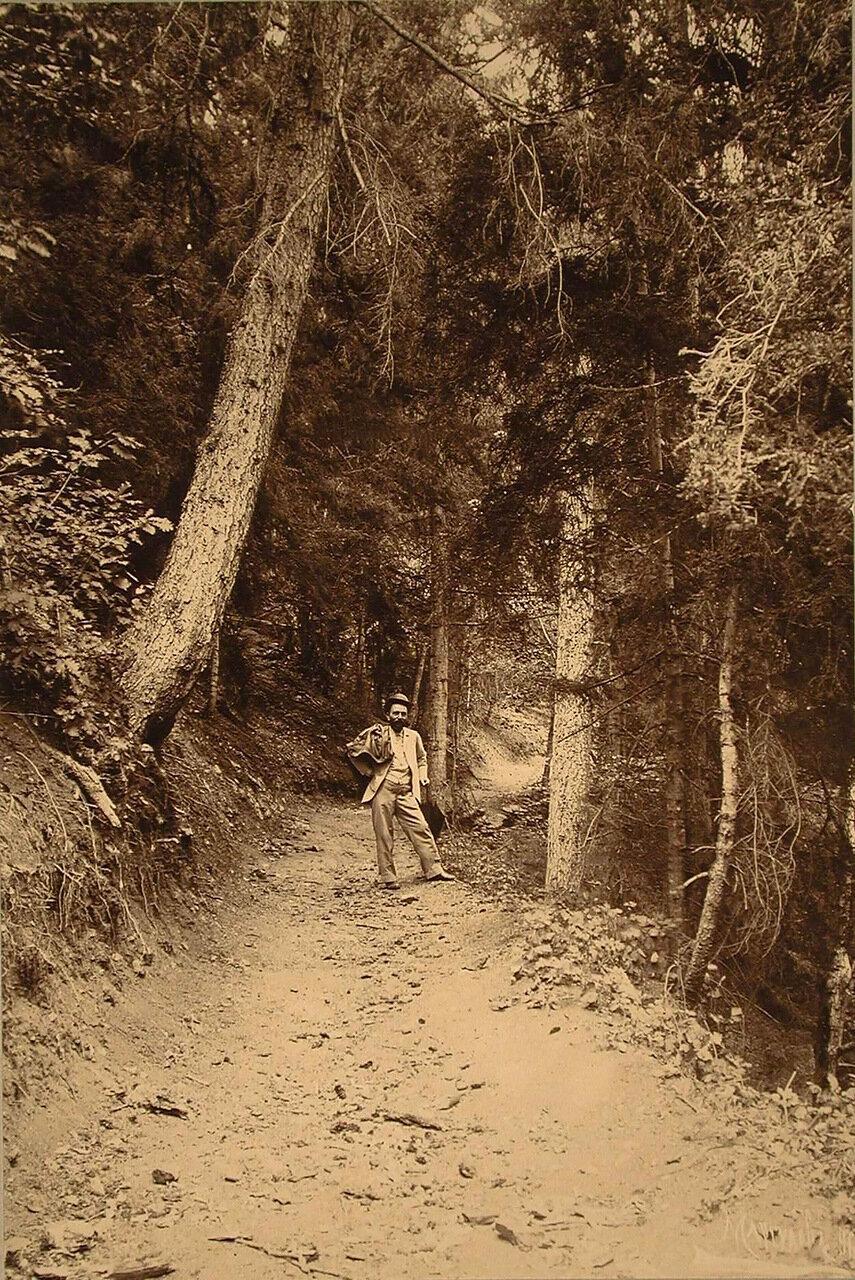 Горная тропинка, ведущая через лесной массив Зекарского перевала, названная  Георгиевская дорожка