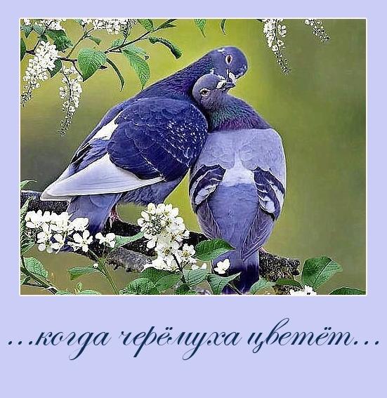 2 голубка.jpg