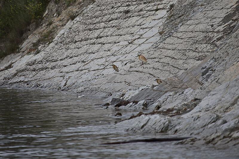 неизвестные Геленджикские птички