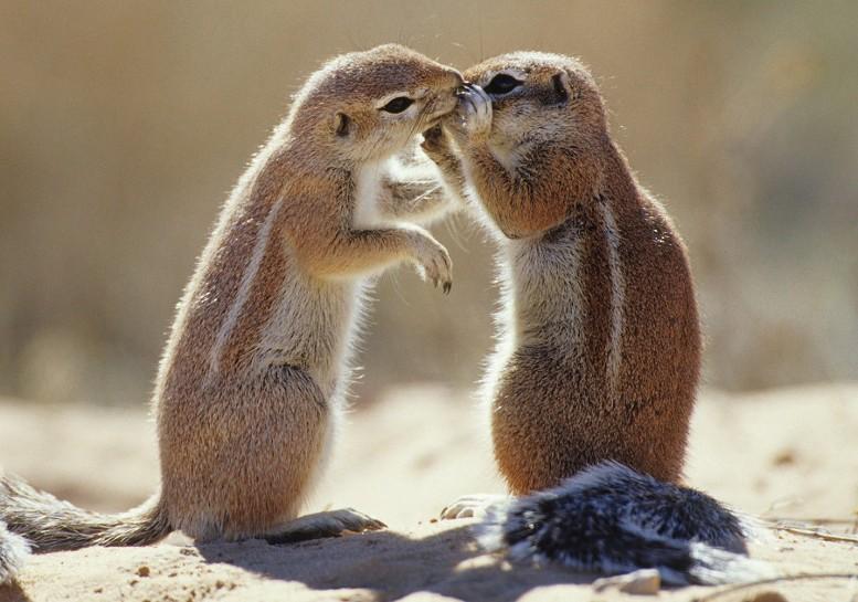 удачный поцелуй