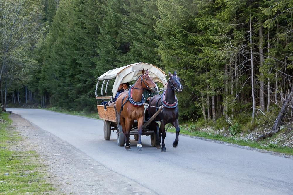 На фото 01 показана статистика движения лошадей