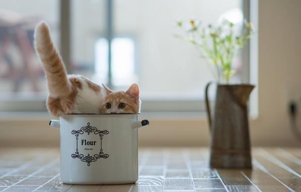 Нужна ли кошка в квартире фото
