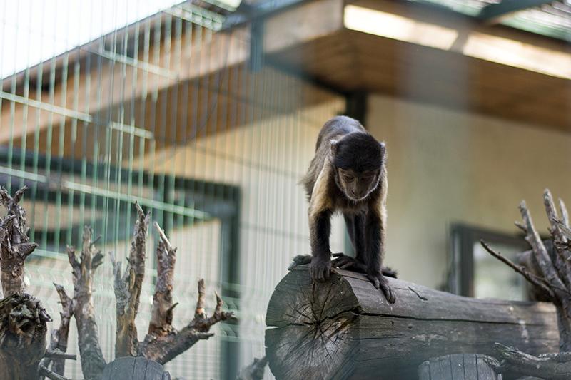 обезьянка 2
