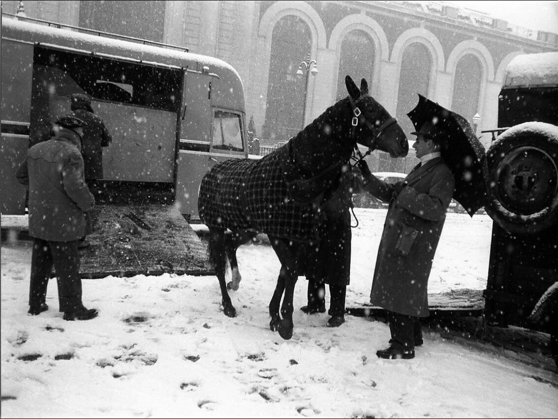1955. Прибытие рысаков